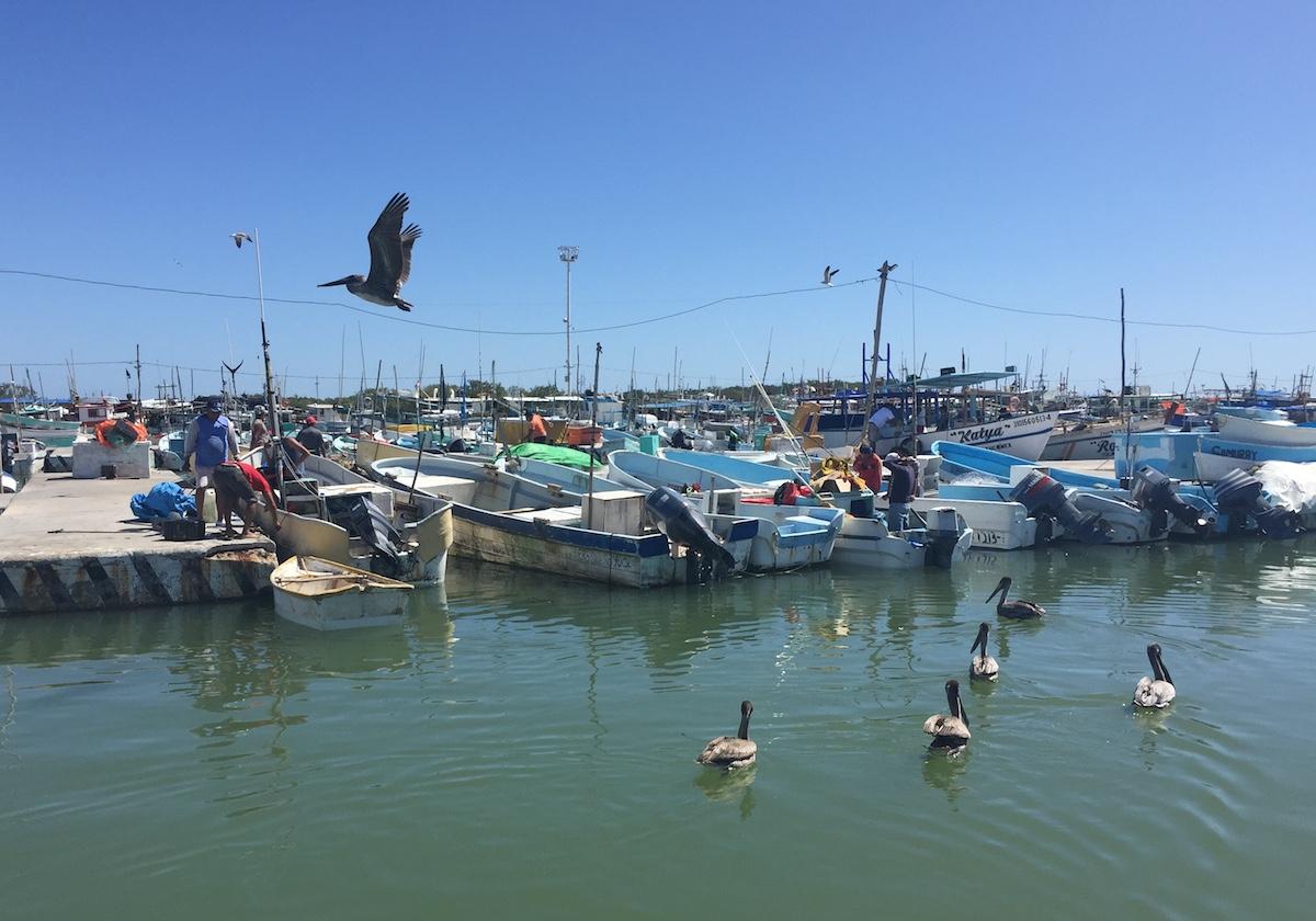 caleta pescadores