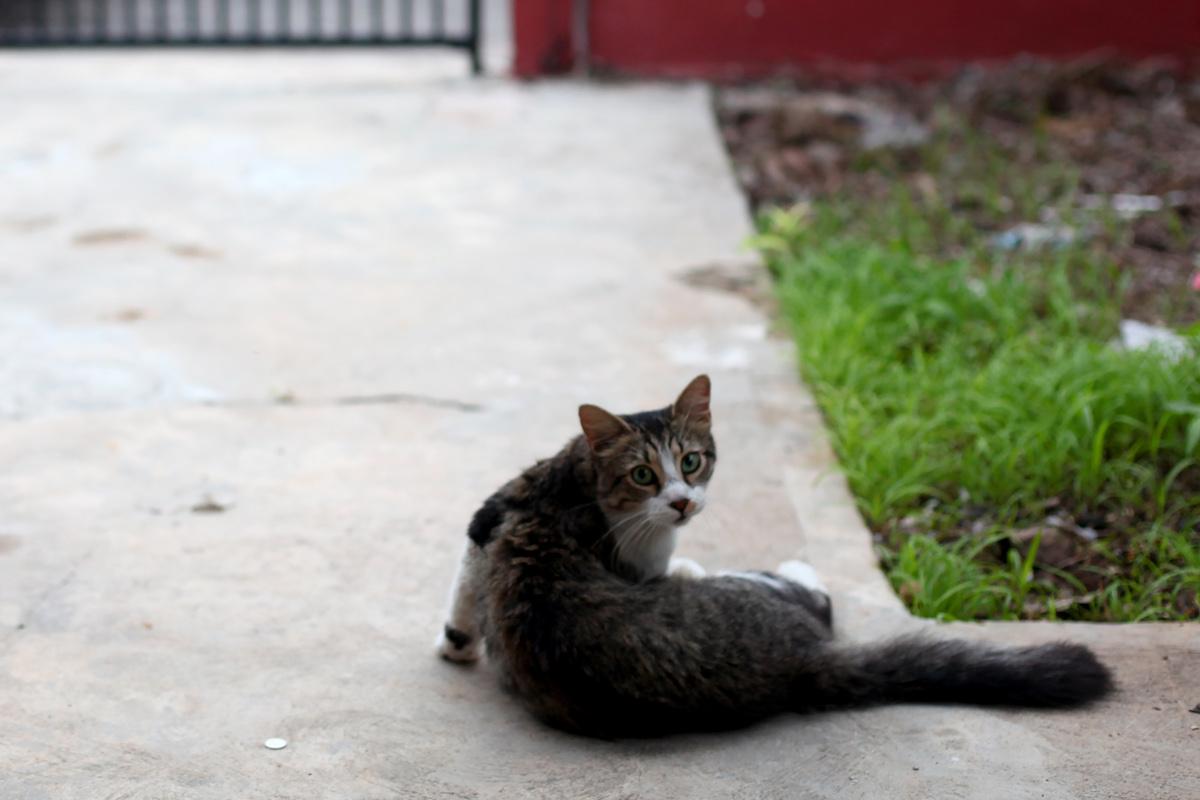 gato7