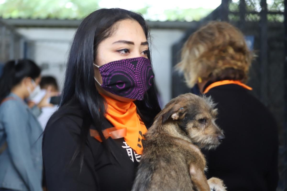 perritos rescate 1