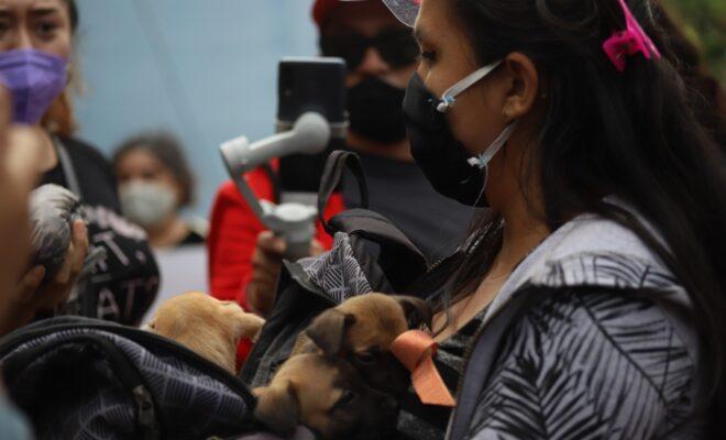 perritos rescate 2