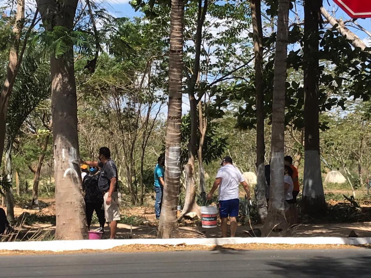 árboles cal